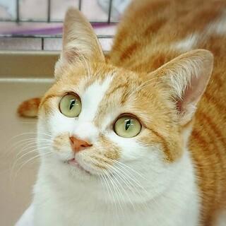 【4/25 東日本橋】宮古島美猫♡マチコちゃん
