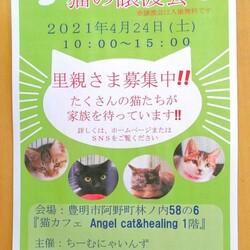 猫の譲渡会 IN 豊明 ~ ちーむにゃいんず 2021年4月24日開催 サムネイル2