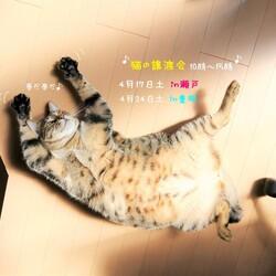 猫の譲渡会 IN 豊明 ~ ちーむにゃいんず 2021年4月24日開催 サムネイル3