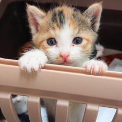 【毎日開催】保護猫の譲渡会 子猫&大人猫