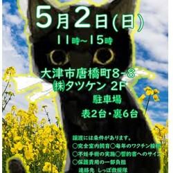 しっぽ救援隊☆石山タツケン譲渡会