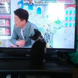 「テレビに夢中!AKBを探せ?」サムネイル1