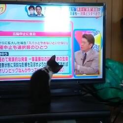 「テレビに夢中!AKBを探せ?」サムネイル2