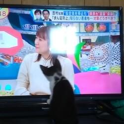 「テレビに夢中!AKBを探せ?」サムネイル3