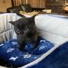 元気な黒猫ちゃん❤︎