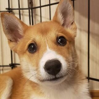 雑種犬♂推定3か月トシくん一時募集停止