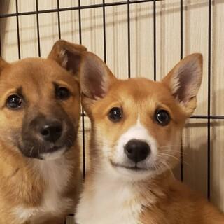 雑種犬♂推定3か月ちびちゃん2