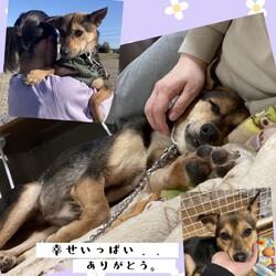 「倉敷っ子、しもりちゃん改めドレミちゃん、家族決定!」サムネイル3