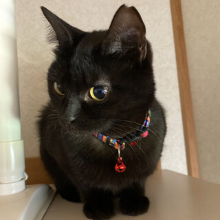 ミャウって鳴くよ♡黒猫ココちゃん