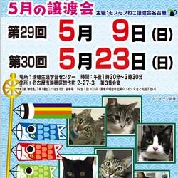 猫の譲渡会 in 名古屋市瑞穂生涯学習センター