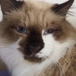 板橋区猫の譲渡 サムネイル1