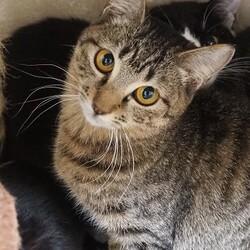 板橋区猫の譲渡 サムネイル2