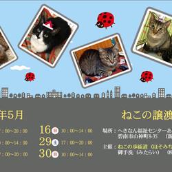 碧南市・保護猫の譲渡会(ねこの歩添道さんの主催の譲渡会)