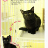 遊ぶのが大好きなカッコいい『黒猫』くん サムネイル4