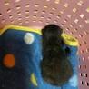 生後10日位、黒ネコ保護 里親募集
