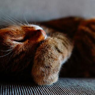 ♀猫(避妊済)の里親さんを探しています
