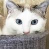 水色の瞳!クールビューティーな甘えん坊♡