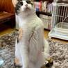おっとり美人三毛猫、ぶちこちゃん サムネイル5