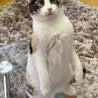おっとり美人三毛猫、ぶちこちゃん サムネイル6