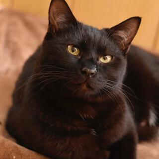 黒猫のロコちゃん2歳