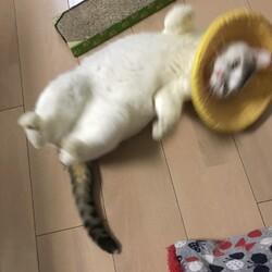 初の猫キック。