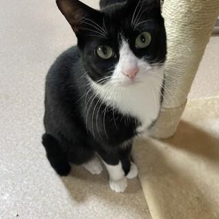 チュール大好き♪可愛い白黒猫さん。