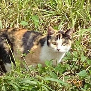 無人島からレスキュー! 若い三毛猫