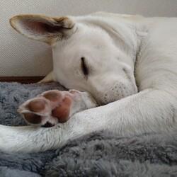寝顔カワイイ。