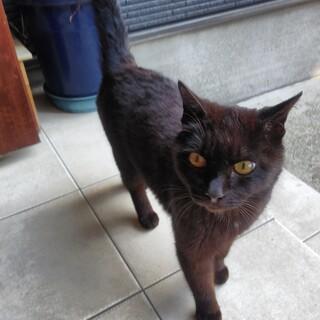 急募 黒猫メス
