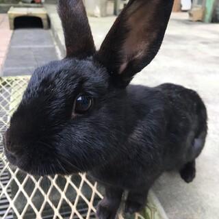 癒しのウサギちゃんに新しいおうちを探しています♪