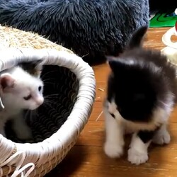 おきなわ美ら仔猫❤猫譲渡会 in 天白区 サムネイル2