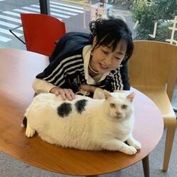 しあわせにゃんこ猫ちゃんの譲渡会IN谷根千「まいの間」