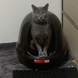 兄が飼育放棄した猫を助けたい