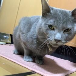 兄が飼育放棄した猫を助けたいサムネイル