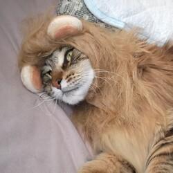 撃たれて死んだライオンか?