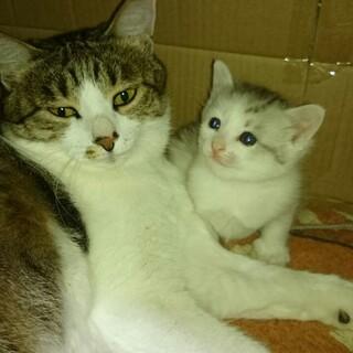 3月21日(日)早朝に出産、母猫と娘猫