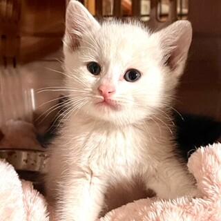 cat-M1005 真っ白長毛ちゃん♪