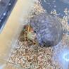 ミシシッピアカミミガメ 食べ方が可愛いです! サムネイル3