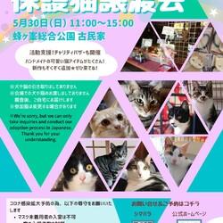 開催中止❗️❗️第16回保護猫譲渡会in山口県