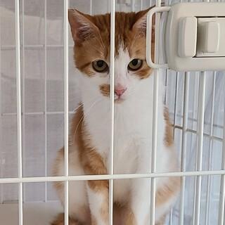 保護猫を迎えよう‼️No.111くん!