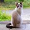 保護猫 八ヶ月位 里親募集 <王子>