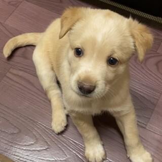元気一杯生後約1.5ヶ月MIX子犬セリーヌちゃん