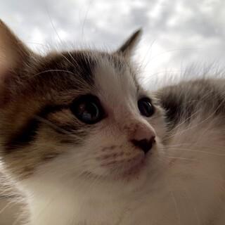 生後6週間の子猫の里親を募集します