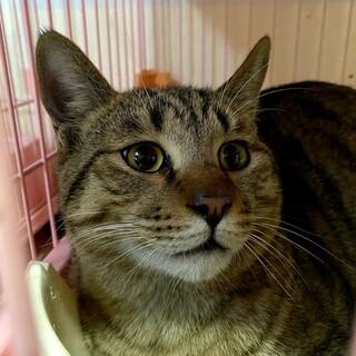 淡路島の猫ちゃんを助けて下さい!