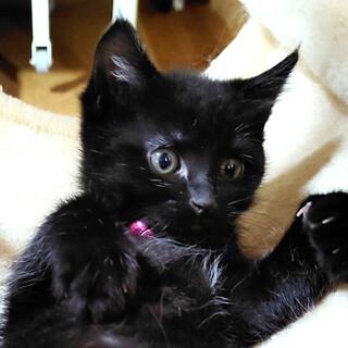 人大好き一緒にお昼寝黒猫女の子❤️宝