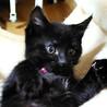 募集一時停止 黒猫女の子❤️宝