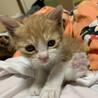 4月中旬に生まれた子猫です★