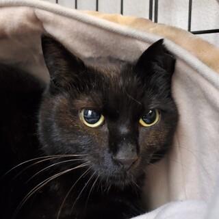 素敵なBlack Cat 優しいメイちゃん