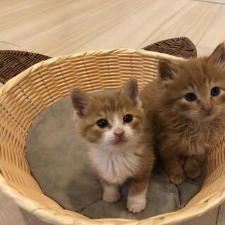 可愛い子猫の兄弟!!