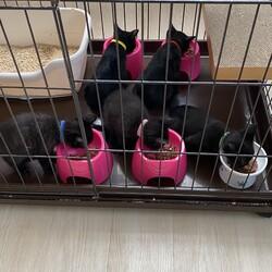 保護猫譲渡会&バザー サムネイル2